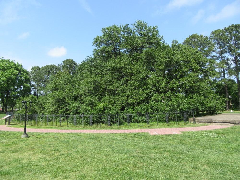 The Emancipation Oak