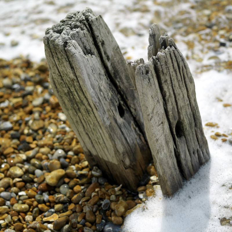 Wood on a beach