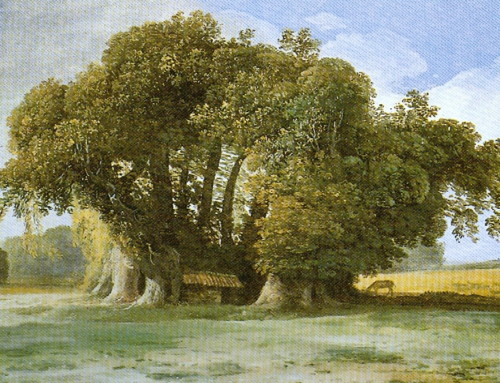 The world's oldest trees: The Tree of One Hundred Horses